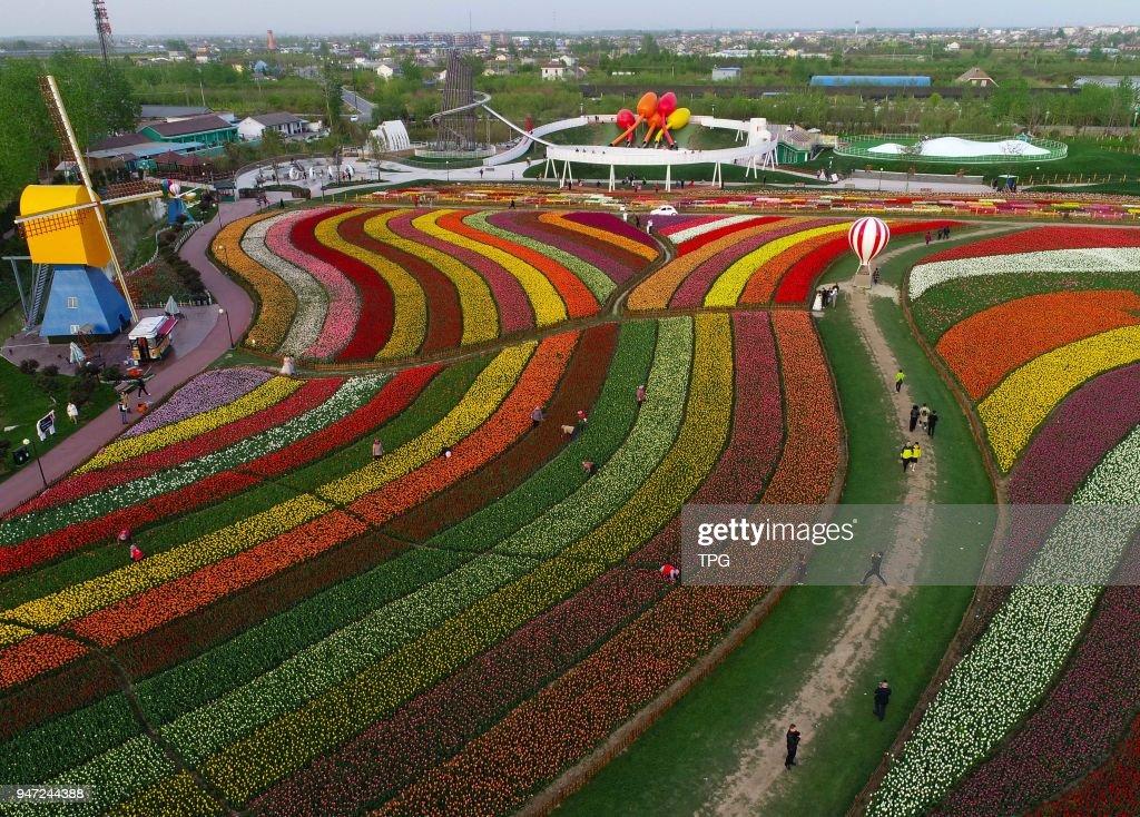 Resultado de imagen de tulip flower sea in Yancheng