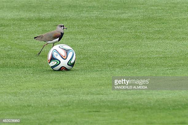 A bird walks by a Brazuca ball during a training session of the Brazilian team at the 2014 FIFA World Cup on July 11 2014 in Teresopolis Brazil will...