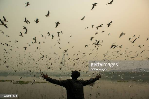 Bird watcher opens his arms to rejoice the sight of seagulls flying over the holy river. A flock of Seagulls fly along the Yamuna River at Nigam Bodh...