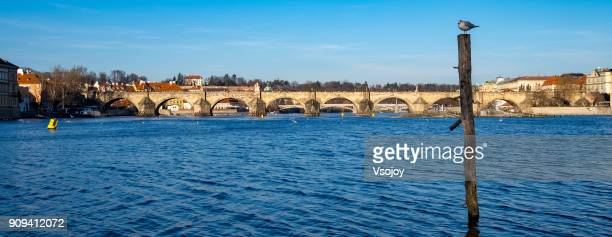 bird watcher over the vltava river, prague, czech republic - vsojoy stock pictures, royalty-free photos & images