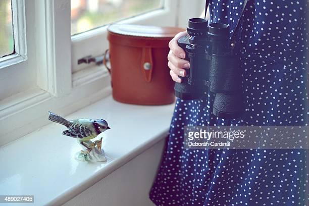 bird watcher - blue cardinal bird stock pictures, royalty-free photos & images