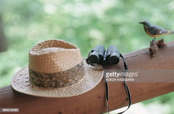 bird watcher's binoculars and hat next to bird perched on wood - irony stockfoto's en -beelden