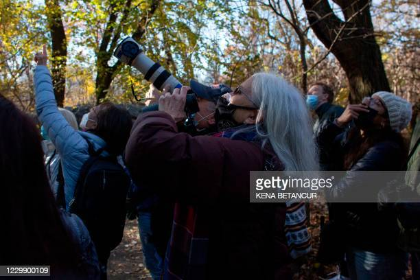 Bird watchers use binoculars and cameras to see a Great Horned Owl at The Ramble in Central Park during a tour offer by Robert DeCandido also known...