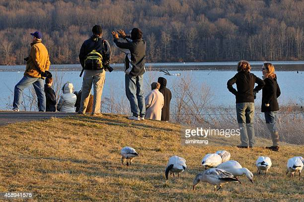 bird watching in pennsylvania - lancaster pennsylvania stock pictures, royalty-free photos & images