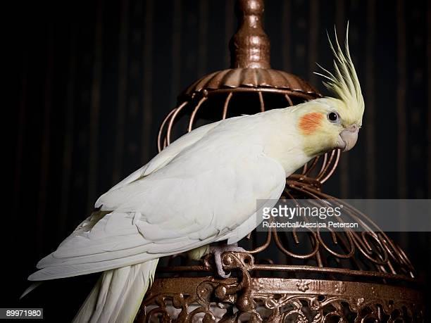 birdcage and a cockatiel