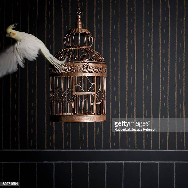birdcage and a cockatiel - cockatiel stock pictures, royalty-free photos & images