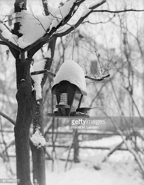 birdhouse covered with snow - number of people stock pictures, royalty-free photos & images