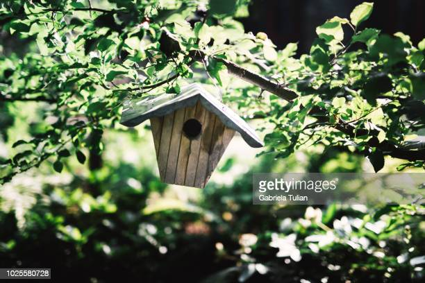 Birdhouse hanging on a tree