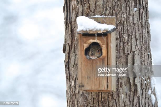 birdhouse i think not! - vogelhäuschen stock-fotos und bilder