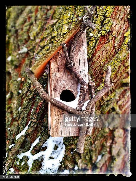 birdhouse on moss covered tree - katie moss stock pictures, royalty-free photos & images