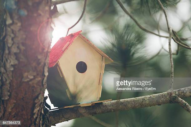 birdhouse on tree during sunny day - birdhouse stock photos and pictures