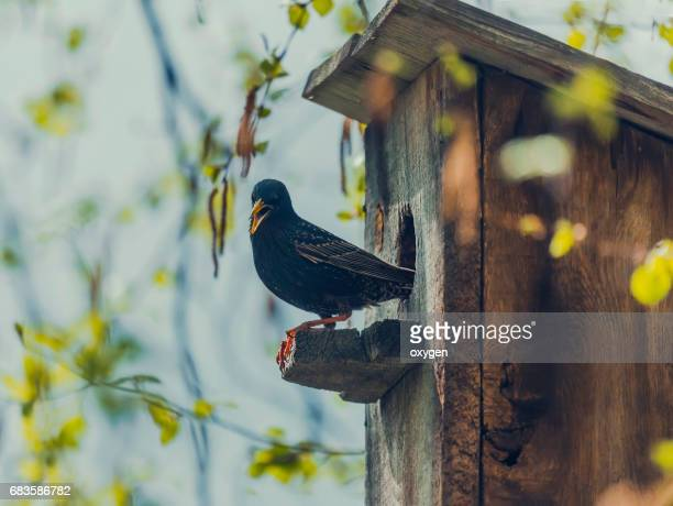Birdhouse with its inhabitant starling