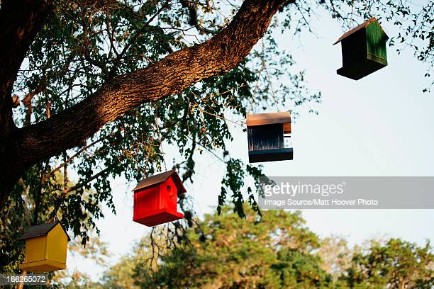 Birdhouses hanging from tree