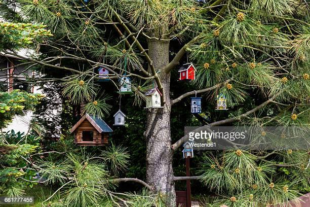 birdhouses hanging in a tree - vogelhäuschen stock-fotos und bilder