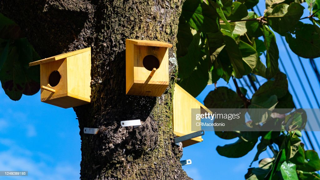 Birdhouses in a tree inside the big city. : Stock Photo