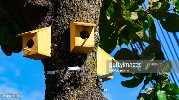birdhouses in a tree inside the big city. - crmacedonio stock pictures, royalty-free photos & images