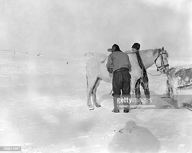 Birdie Bowers tending to the pony Victor at Cape Evans photographed during the last tragic voyage to Antarctica by Captain Robert Falcon Scott circa...