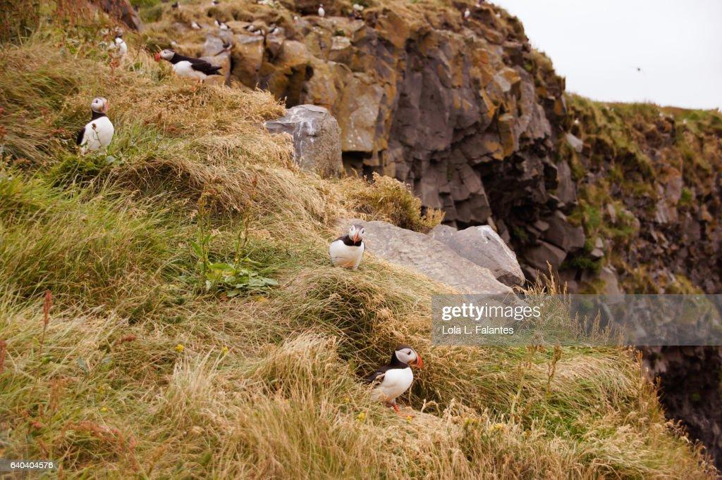 Birdlife at the cliffs : Foto de stock