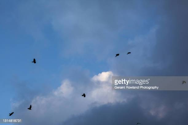 birds above london town - geraint rowland stock pictures, royalty-free photos & images