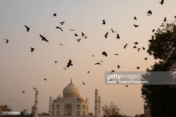 birds above the taj mahal - celebrity death stock pictures, royalty-free photos & images