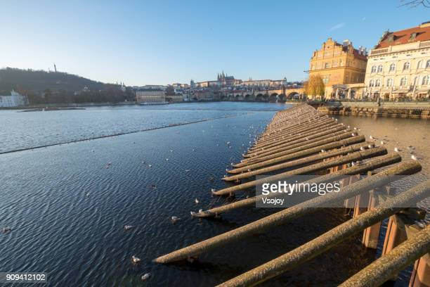 birds along the vltava river and charles bridge in prague, czech republic - vsojoy stock pictures, royalty-free photos & images