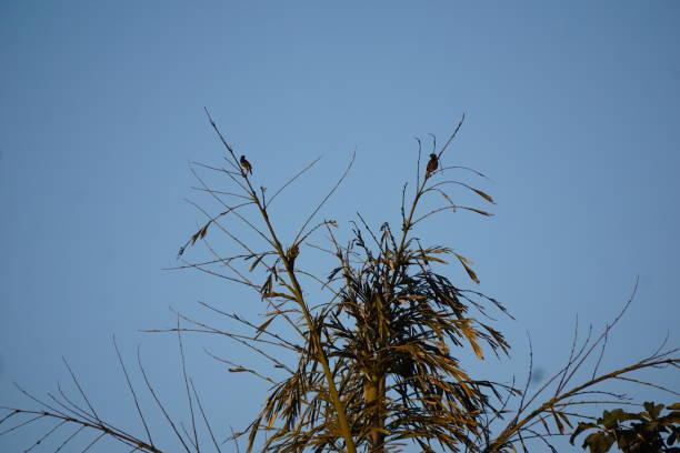 Birds & The Blue Sky