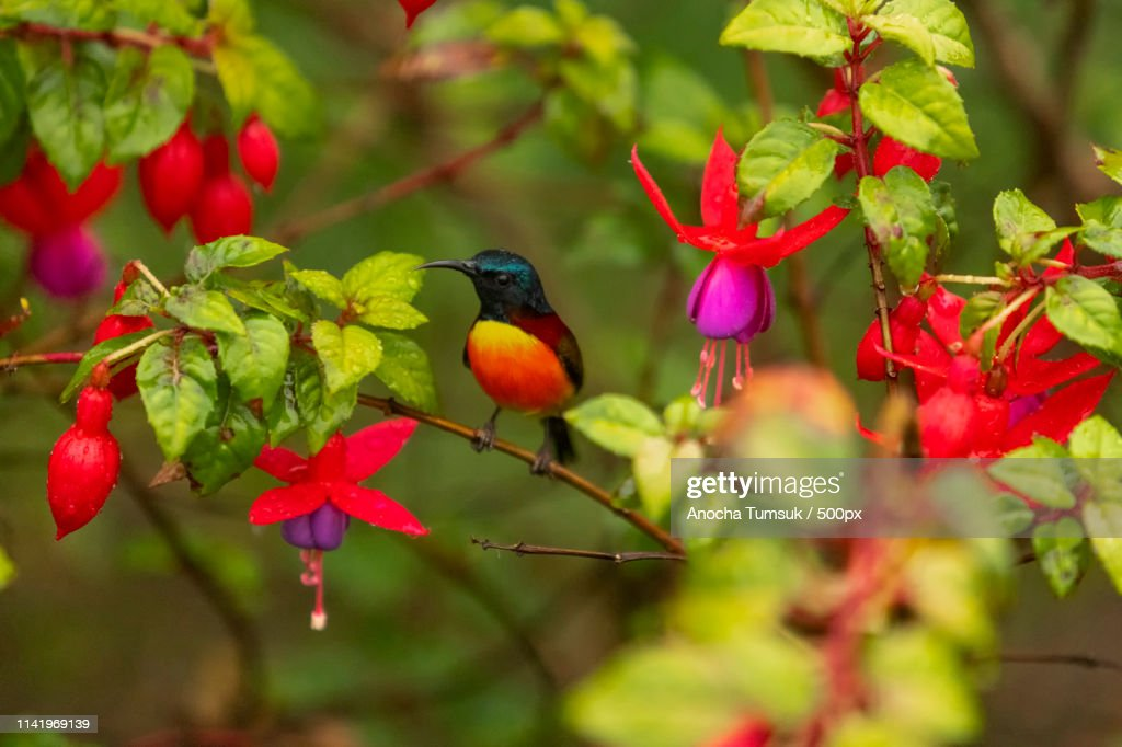 Birds And Flowers, Yellow-Red-Blue-Brown-Purple : Stock Photo