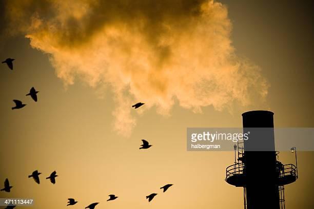 Birds and Smokestack