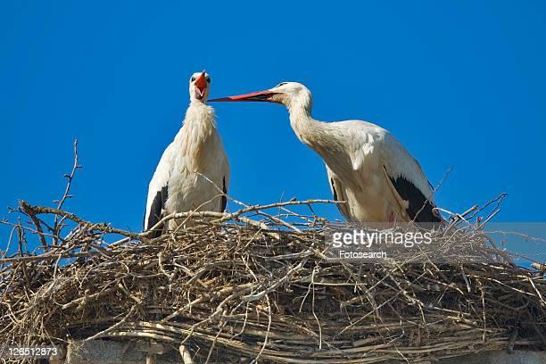 birds, animal, bird nests, bird, animals, alfred