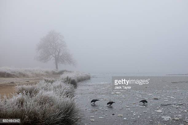 Birds are pictured on a frozen lake in Richmond Park on January 23 2017 in London United Kingdom Thick fog and temperatures below freezing have...
