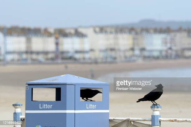 Birds are seen eating from the litter bin on the promenade on April 05 2020 in Weymouth United Kingdom The Coronavirus pandemic has spread to many...