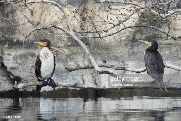 Birds are seen on a branch in Gediz River in Adala Canyon which is believed formed after a volcanic eruption thousands years ago in the district of...