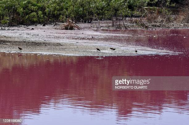 Birds are seen on the shore of the Cerro Lake, formed from a meander of the Paraguay River, during a protest by locals against a nearby tannery which...