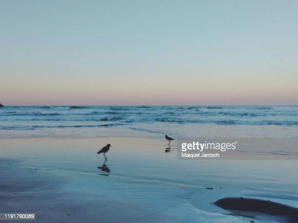 birds at matadeiro beach in florianopolis, santa catarina - brazil - mata atlantica stock-fotos und bilder