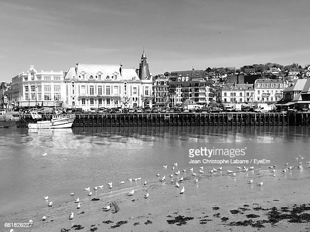 birds at riverbank in city - trouville sur mer stock pictures, royalty-free photos & images