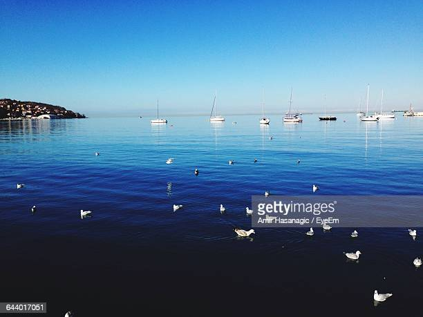 birds at sea against clear blue sky - koper stock photos and pictures