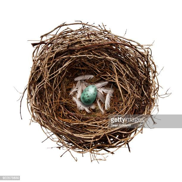bird's egg in nest - birds nest stock photos and pictures