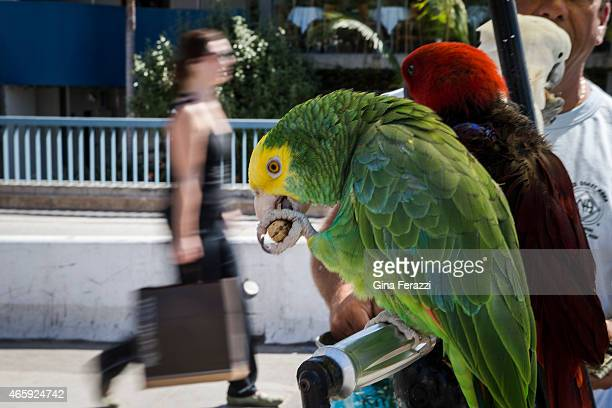 """Birds enjoy the view, as tourists walk past the tricked-out tricycle belonging to the """"Bird Man of Santa Monica"""" Howard Kaminsky while visiting..."""