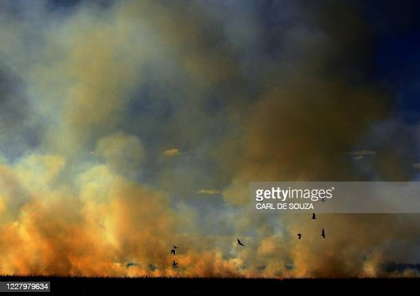 Birds escape as smoke rises from an illegally lit fire on a maize field that border a rainforest reserve, in Sinop, Mato Grosso State, Brazil, on...