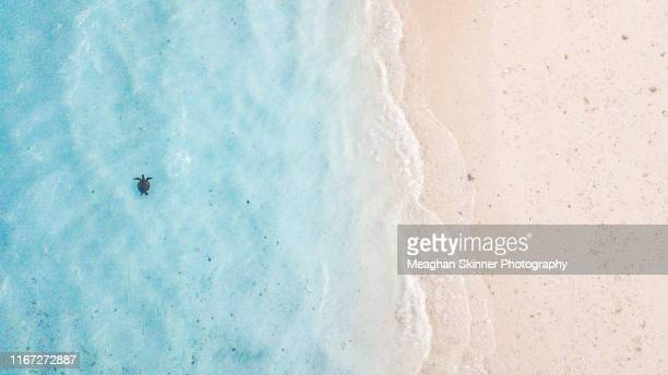 a birds eye view of heron island - great barrier reef aerial stock pictures, royalty-free photos & images