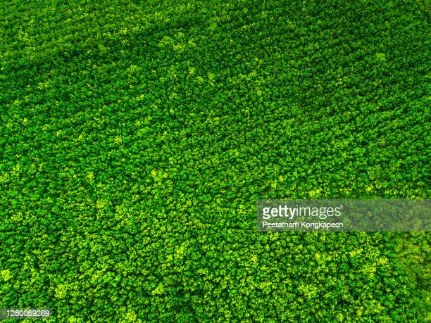 bird's eye view of the forest - lush stock pictures, royalty-free photos & images
