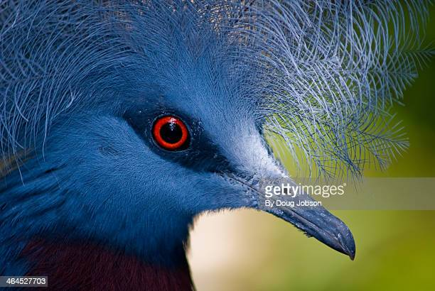 birds eye view - papua new guinea stock pictures, royalty-free photos & images