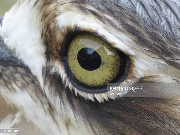 birds eye view - schnabel stock-fotos und bilder