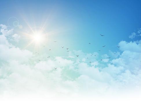 Birds flight in rising sun 822047112