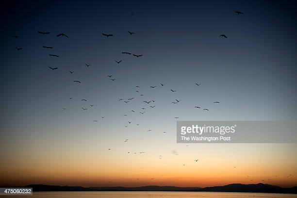 Birds fly at sunset above the Salton Sea in Calipatria CA on April 17 2015 The shrinking sea is a refuge for migrating birds
