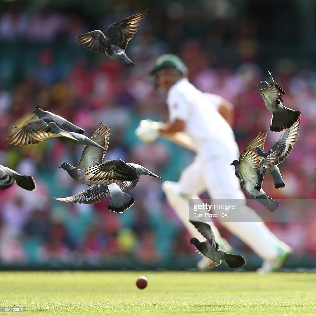 Birds fly away after Younis Khan of Pakistan played a shot during day three of the Third Test match between Australia and Pakistan at Sydney Cricket Ground on January 5, 2017 in Sydney, Australia.