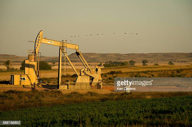 Birds fly beyond a pump jack near a field of alfalfa in Bainville Montana Sept 10 2013 Back in 2008 the North Dakota oil boom started its ongoing...