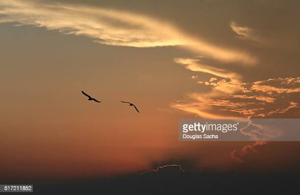 Birds fly in the Amber colored Sky at dusk