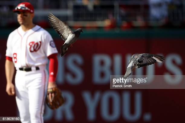 Birds fly on the field while Danny Espinosa of the Washington Nationals looks on against the Los Angeles Dodgers in the seventh inning during game...