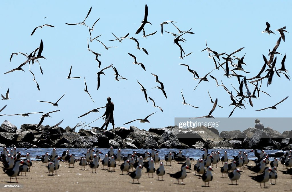 Crews Formally End Clean-up of BP Oil Spill : News Photo